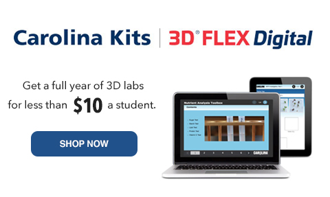 3D Flex Digital