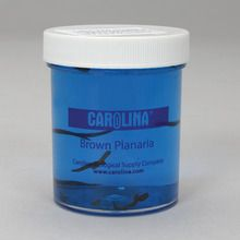 Planaria, Living, Vitachrome®
