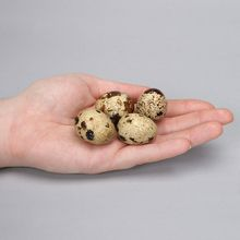 Coturnix Quail Eggs, Fertile, Unit of 24