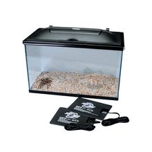 Tarantula Habitat, Deluxe, with Curly Hair Tarantula (with perishables)
