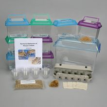 Territorial Behavior of House Crickets Kit