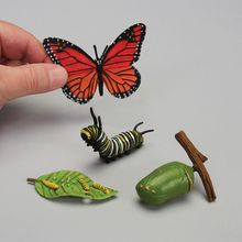 Butterfly Life Cycle Model Set
