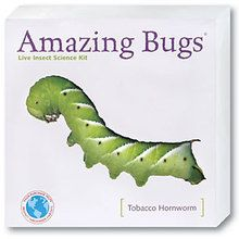 Hornworm Amazing Bugs® Kit