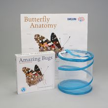 Painted Lady Butterfly Amazing Bugs® Kit (with live caterpillars)