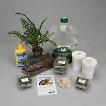 Fire-Bellied Toad Habitat Kit (with perishables)