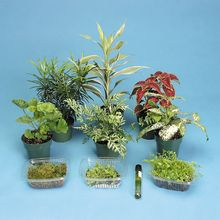 Basic Plant Kingdom Survey Set, Living