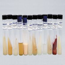 Advanced High School Bacteria Collection Set, Living