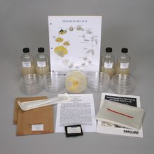 Physarum Culture Kit