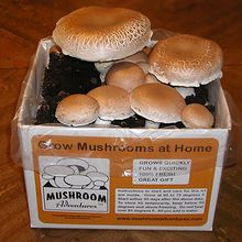 Colossal Brown Mushroom Kit