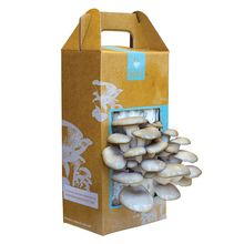 Grow Your Own Mushroom Garden Kit