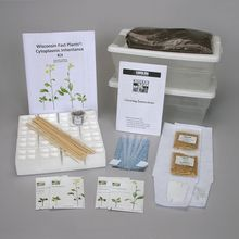 Wisconsin Fast Plants® Cytoplasmic Inheritance Kit