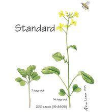 Wisconsin Fast Plants® Standard Seed (Improved Basic, Rbr), Pack of 50