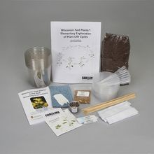 Wisconsin Fast Plants® Elementary Exploration of Plant Life Cycles Kit