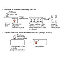 Transduction of an Antibiotic-Resistance Gene Kit (with prepaid coupon)