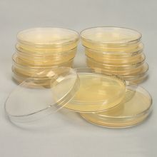 Luria Broth, Prepoured Agar Plates