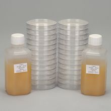 Luria Broth Ready-to-Pour Agar Media