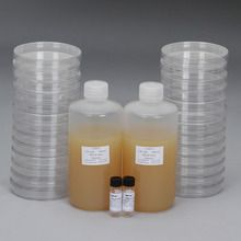 Luria Broth Agar + Ampicillin Ready-to-Pour Media Set