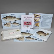 Perch Dissection BioKit® with Dissection Mats
