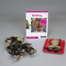 Bullfrog Dissection BioKit®