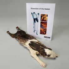 Rabbit Anatomy Kit with Dissecting Set