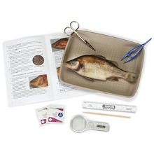 Carolina's Young Scientist™ Perch Dissection Kit