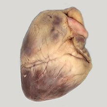 Carolina's Perfect Solution® Sheep Heart, Plain, Bulk Bag