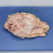 Formalin Sheep Heart in Pericardium, Plain, Bulk Bag