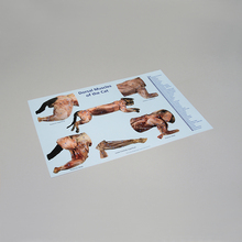 Carolina® Muscles of the Cat Dissection Mat