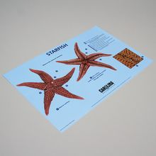 Carolina® Starfish Dissection Mat