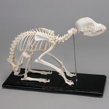 Dog Skeleton, Articulated