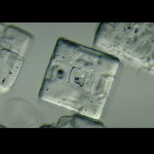 Salt Crystals, w.m., Microscope Slides