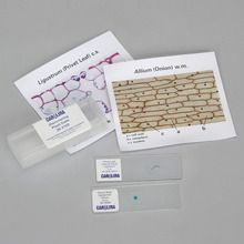 Discovering Plant Cells Self-Study Unit, Microscope Slide Set