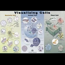 Visualizing Cells Microscope Slide and Poster Set