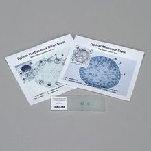 Discovering Monocot and Dicot Stems Self-Study Unit, Microscope Slide Set