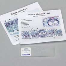 Discovering Monocot and Dicot Leaves Self-Study Unit, Microscope Slide Set