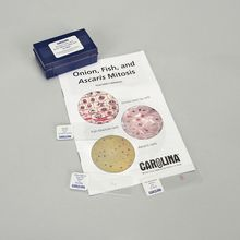 Ascaris, Fish, and Onion Mitosis Microscope Slide and Study Guide Set