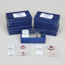 Chick Embryology Microscope Slide Set