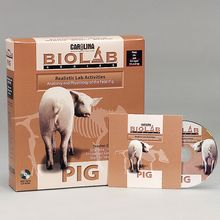 Carolina® Bio Lab®: Pig CD-ROM