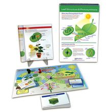 Photosynthesis Curriculum Learning Module