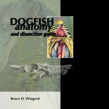 Dogfish Anatomy and Dissection Guide