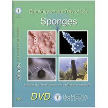 Branches on the Tree of Life: Sponges DVD