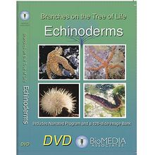 Branches on the Tree of Life: Echinoderms DVD
