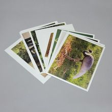 Photo Cards, Living and Nonliving, Set of 20