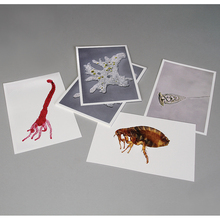 Photo Card Set, Observing Different Organisms, Pack of 4