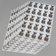 Photo Card Set, Koala, Pack of 16