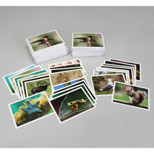 Card Set, Organism Interactions, Pack of 16