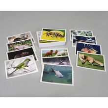 Photo Card Set, Introduced and Invasive Species, Pack of 8