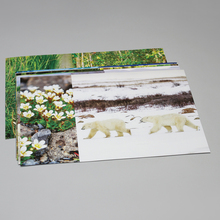 Photo Card Set, Ecosystem Diversity