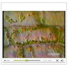 An Introduction to the Living Cell: The Cytoplasm Video