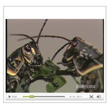 Grasshopper Anatomy: External Anatomy Video